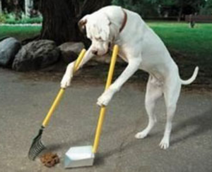 Dogs Cleaning His Mess
