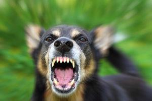 Dogs Barking Heavily