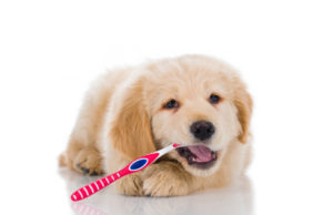 Puppy Teeth Cleaning