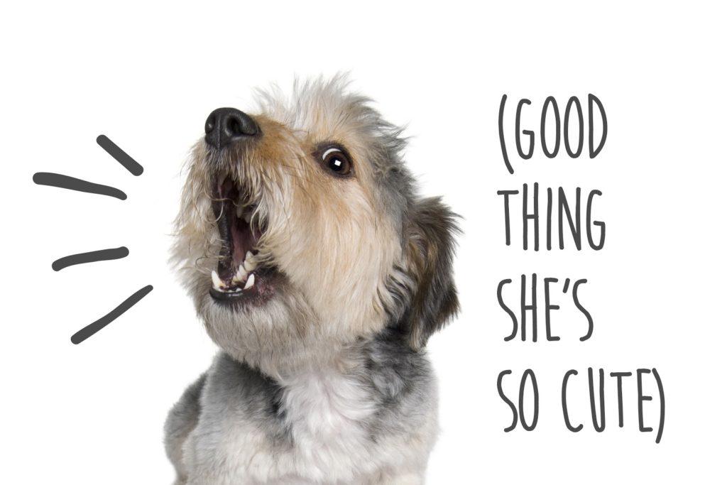 Dogs Barking But Cute