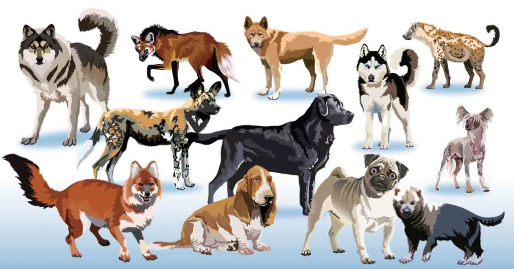 A Glance at the Top 25 Popular Dog Breeds - Just For The Dogs